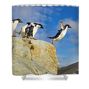 Adelie Penguins Jumping Shower Curtain