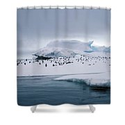 Adelie Penguins On Iceberg Weddell Sea Shower Curtain