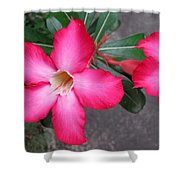 Adenium 2 Shower Curtain