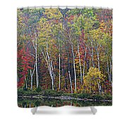Adirondack Birch Foliage Shower Curtain