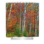 Adirondack Birches In Autumn Shower Curtain