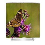 Admiral Butterfly  Shower Curtain by Douglas Barnett