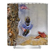 Adopted Amphibian Shower Curtain