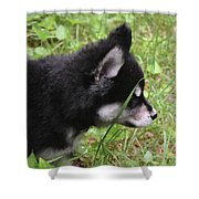Adorable Alusky Pup Creeping Through Tall Blades Of Grass Shower Curtain