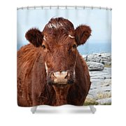 Adorable Brown Cow Standing On The Burren Shower Curtain