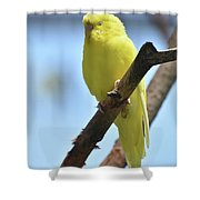 Adorable Face Of A Yellow Budgie Parakeet Shower Curtain