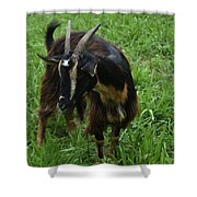 Adorable Goat In A Field With Thick Green Grass Shower Curtain