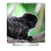 Adorable Goeldi's Marmoset In A Tree Shower Curtain