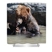 Adorable Grizzly Bear Playing With A Maple Leaf While Sitting In Shower Curtain