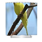 Adorable Little Yellow Parakeet In A Tree Shower Curtain