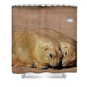 Adorable Pair Of Prairie Dogs Cuddling Together Shower Curtain