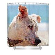 Adorable Small Dog On The Beach Shower Curtain