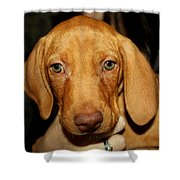 Adorable Vizsla Puppy Shower Curtain