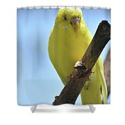 Adorable Yellow Budgie Parakeet Bird Close Up Shower Curtain