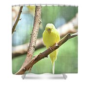 Adorable Yellow Budgie Parakeet Relaxing In A Tree Shower Curtain
