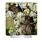 Adorned With Beauty Shower Curtain