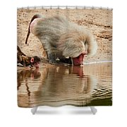 Adult Baboon And Baby Together On The Waterfront  Shower Curtain