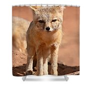 Adult Kit Fox Ears And All Shower Curtain