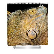 Adult Male Green Iguana Shower Curtain
