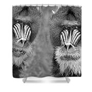 Adult Male Mandrills Black And White Version Shower Curtain