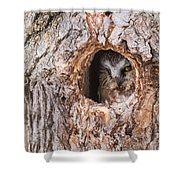 Adult Saw-whet Owl Shower Curtain