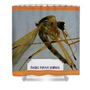Aedes Fulvus Pallens- Mosquito Shower Curtain