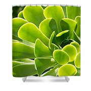 Aeonium Canariense Shower Curtain