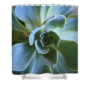 Aeonium Shower Curtain