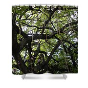 Aerial Network II Shower Curtain