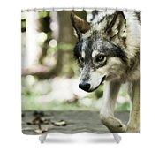 Aero Wolf 1 Shower Curtain