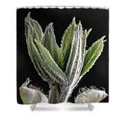 Aesculus Hippocastanum Horse Chestnut 2 Shower Curtain