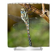 Aeshna Mixta Dragonfly Shower Curtain