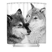 Affection Of Wolves Shower Curtain