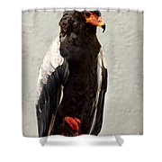 African Eagle-bateleur II Shower Curtain