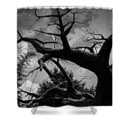 Africa Tree Shower Curtain