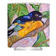African Blue Eared Starling Shower Curtain