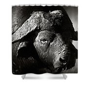 African Buffalo Bull Close-up Shower Curtain
