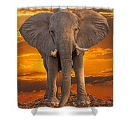 African Bull Elephant At Sunset Shower Curtain