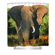 African Bull Elephant Shower Curtain