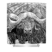 African Cape Buffalo Shower Curtain