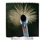 African Crowned Crane At The Omaha Zoo Shower Curtain