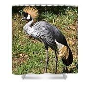 African Crowned Crane Poising Shower Curtain