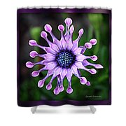 African Daisy - Hdr Shower Curtain