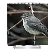 African Dusky Flycatcher Shower Curtain
