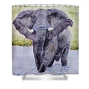 African Elephant Crossing The Chobe River Shower Curtain