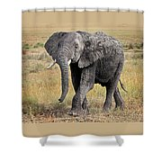 African Elephant Happy And Free Shower Curtain