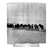 African Elephant Herd Shower Curtain