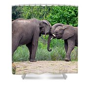 African Elephants Interacting Shower Curtain