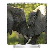 African Elephants Loxodonta Africana Shower Curtain