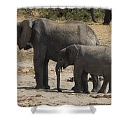 African Elephants Mother And Baby Shower Curtain